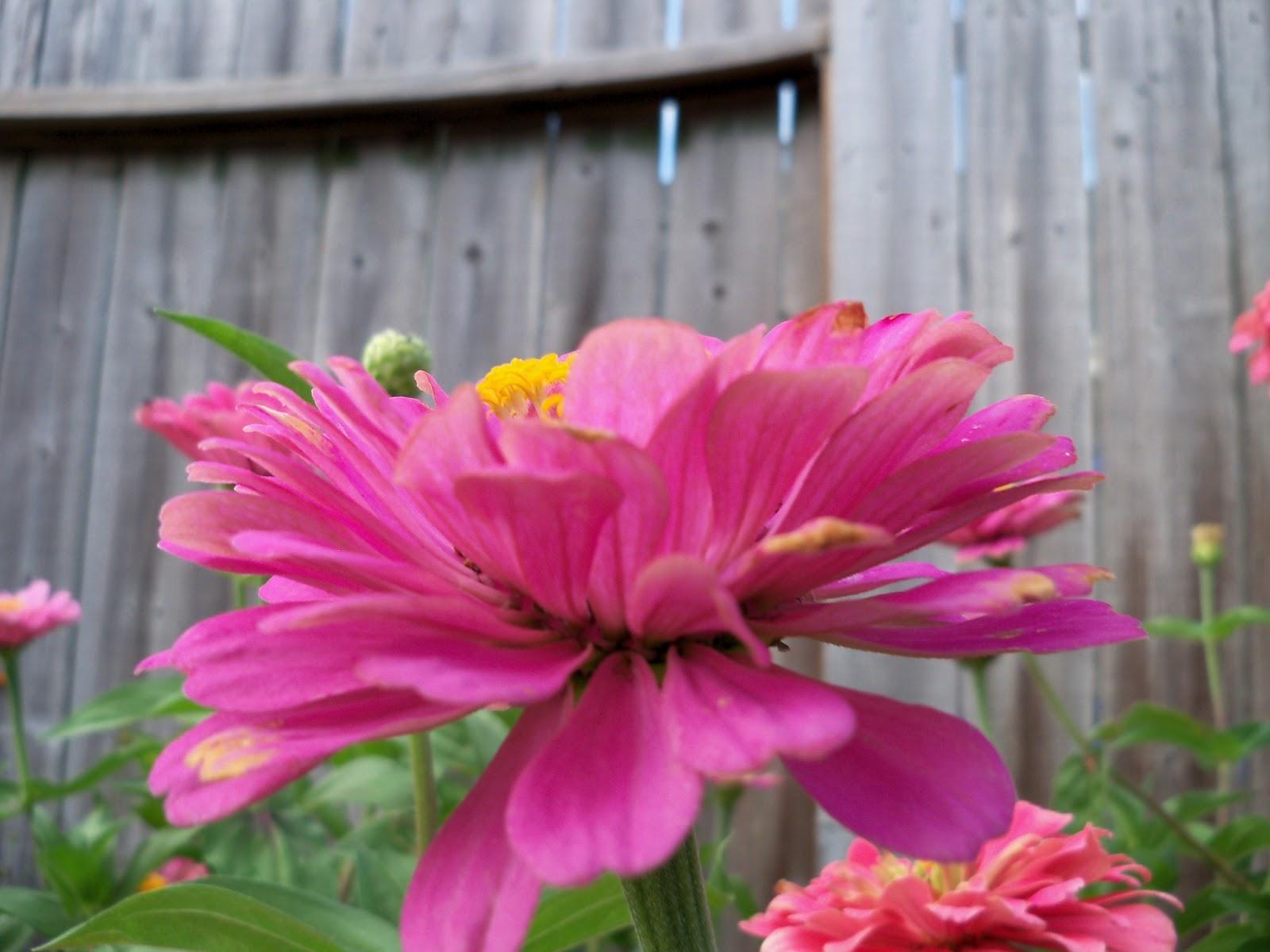 Gardening 2011 - 100_8821.JPG