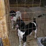 Fall 2012 - puppy4.jpg