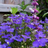 Gardening 2012 - 115_1680.JPG