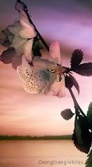 Dream_Flower.jpg