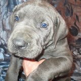 Cressman boy @ 5 weeks
