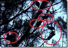 Topi sugli alberi a Scampia