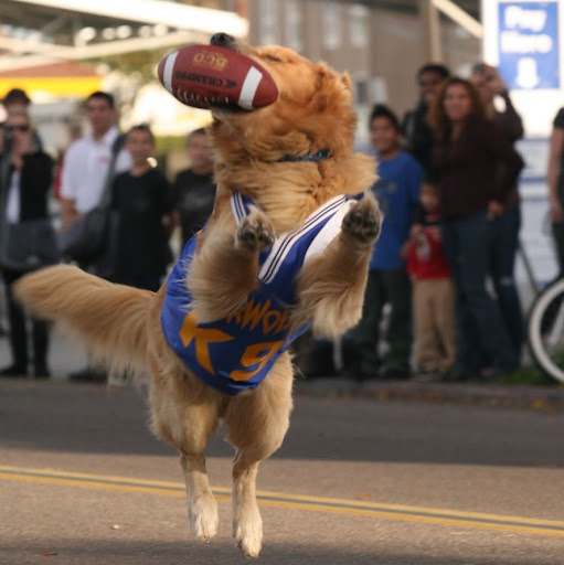 Air Bud Football Josh Photo jpgAir Bud Football Josh