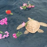 Turtle floating.JPG