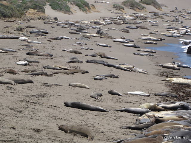 2010 - SX10_0034_Elephant_Seals.JPG