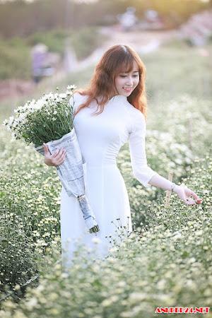 Hoa khôi trường Dược khoe vẻ ngọt ngào bên cúc họa mi