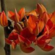 JayantaGH
