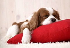 Cute-Dog-1 (5)