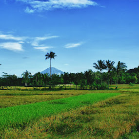 by Yudhi Hendra - Landscapes Prairies, Meadows & Fields