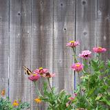 Gardening 2011 - 100_9499.JPG