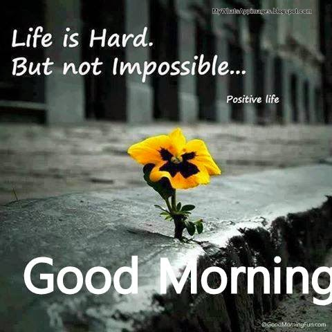 Good Morning Wording Wishes pics free download