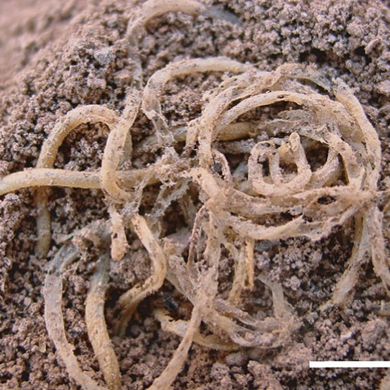 L'origine degli spaghetti è cinese, ha più di 4.000 anni.