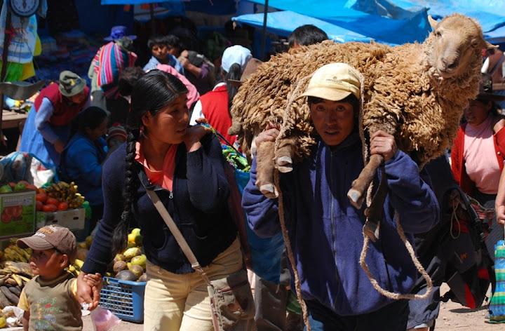 Mouton acheté sur un marché