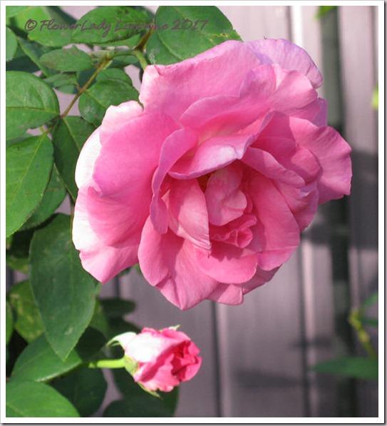 02-28-paul-mc-rose2