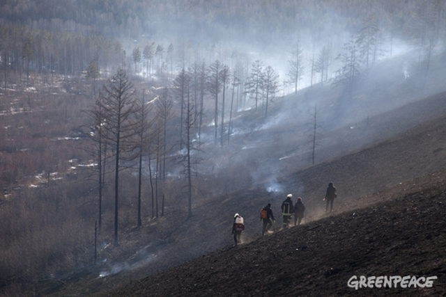 Forest fires in Zabaikalsky region, Siberia, Russia. This land suffered from wildfires for years. Photo: Maria Vasileva / Greenpeace