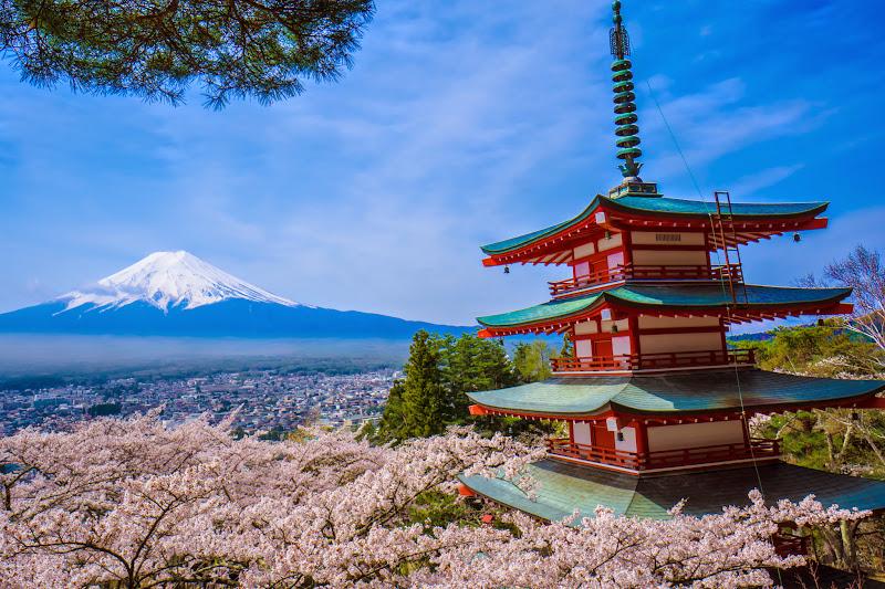 新倉富士浅間神社 桜 富士山 写真3