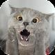 Приколы – Смешные приколы (app)