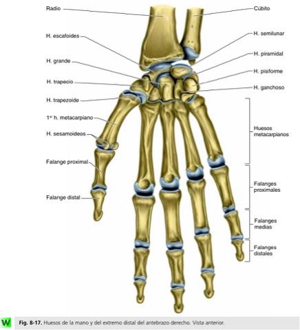 Dr.SoTello: El hueso del carpo