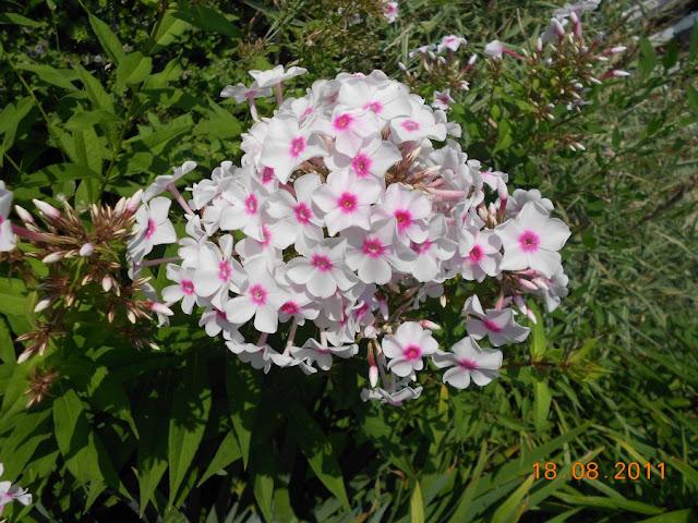 Садово-огородный дизайн  - Страница 4 DSCN0606