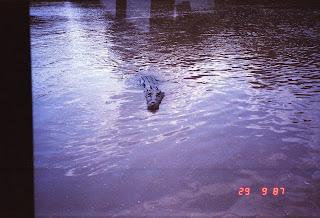 6010Adelaide River Croc Tour