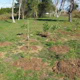 Hammo Planting - Shannon Schiesser - IMG_4951.JPG