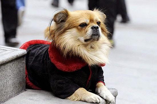 Chó và những câu chuyện để suy ngẫm-6