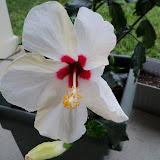 Gardening 2010 - 101_1550.JPG