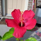 Gardening 2010, Part Three - 101_4937.JPG