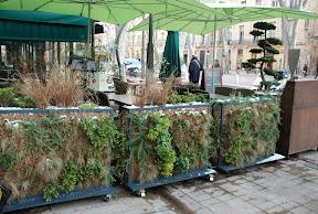 Restaurant Japonais   GEISHA SUSHI EXPERIENCE   AIX EN PROVENCE ; Jardinières végétales réalisées par un paysagiste spécialisé dans les murs végétaux
