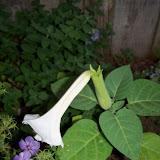 Gardening 2011 - 100_8745.JPG
