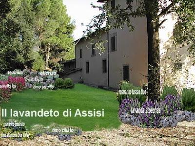 Progetti giardini online gratis progetti giardini privati for Progetto aiuole per giardino