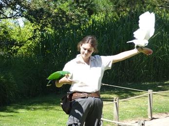 2017.06.17-036 spectacle d'oiseaux en vol libre