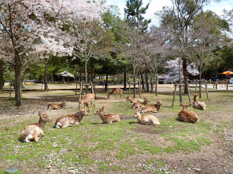 2014 Japan - Dag 8 - tom-SAM_0538-0043.JPG