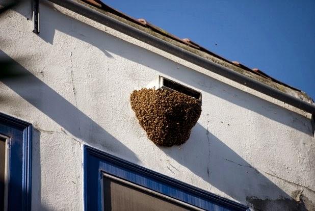 Echo Park, bees