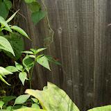 Gardening 2010, Part Three - 101_5192.JPG
