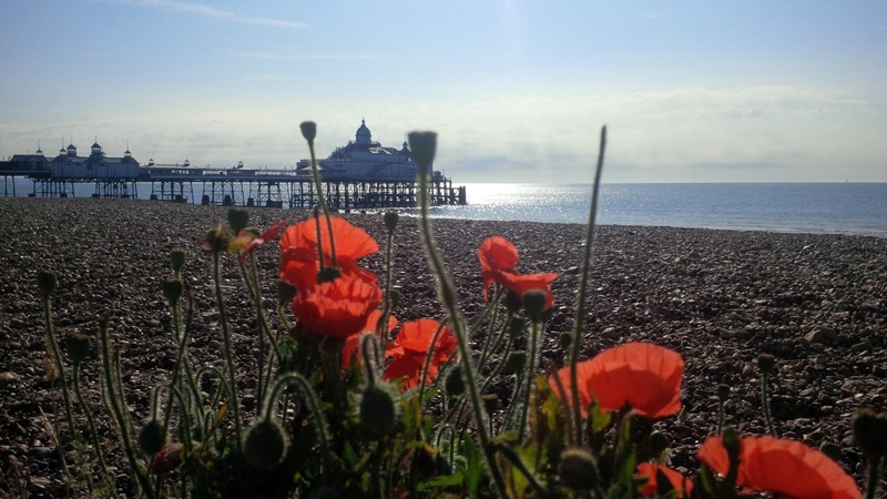 poppies by the pier