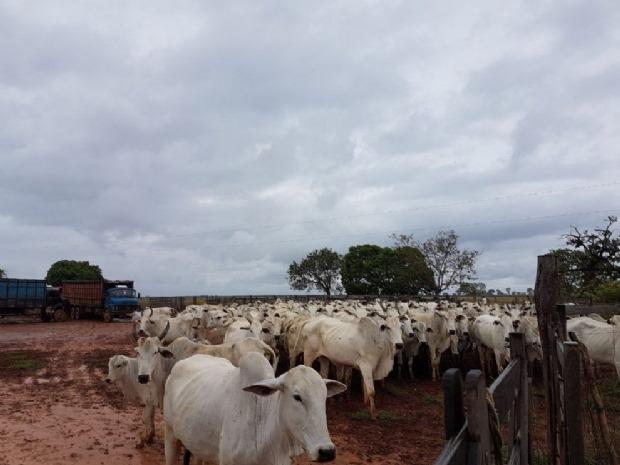 amp-furto-de-gado-em-fazenda-na-cidade-de-Joao-Pinheiro-4-990x743