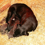Star & True Blues February 21, 2008 Litter - HPIM0932.JPG