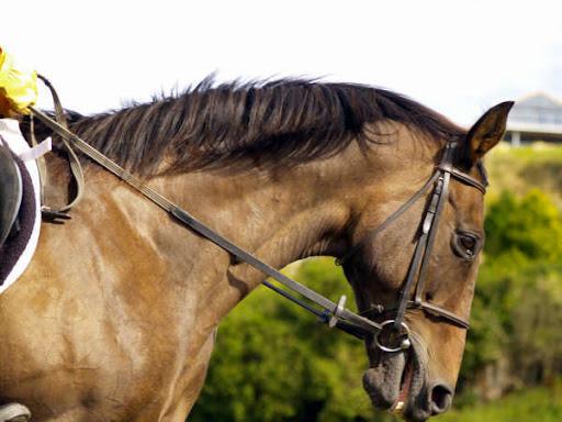 Sky  doing  Dressage  -  West Harbour Pony Club