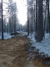 Photo: Hossa 29.11.2011. Tässä kohdassa maastoon kaivettu tieura kulkee n. 200 m retkeilypolun päällä. Kuva: Lea Vainio.