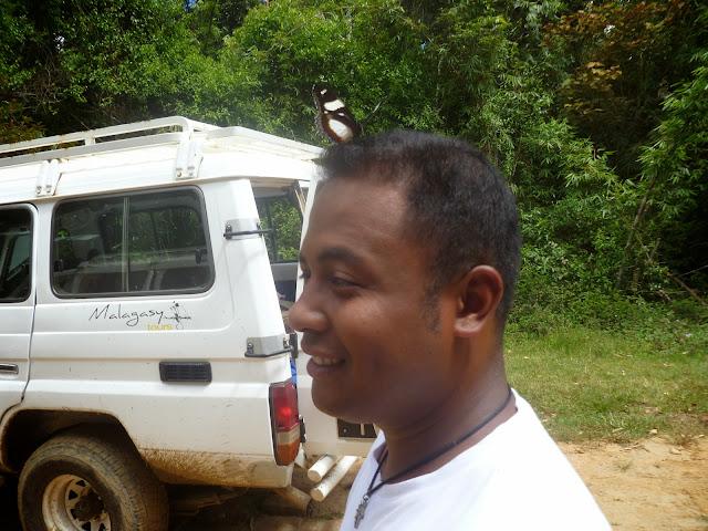 Hypolimnas dexithea (HEWITSON, 1863). Parc de Mantadia (Madagascar), 28 décembre 2013. Photo : J. Marquet