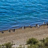 Domingo na praia!!! - Península Valdez, Argentina