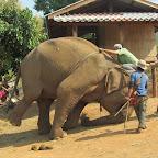 Elephant Special Tours - Training Trip