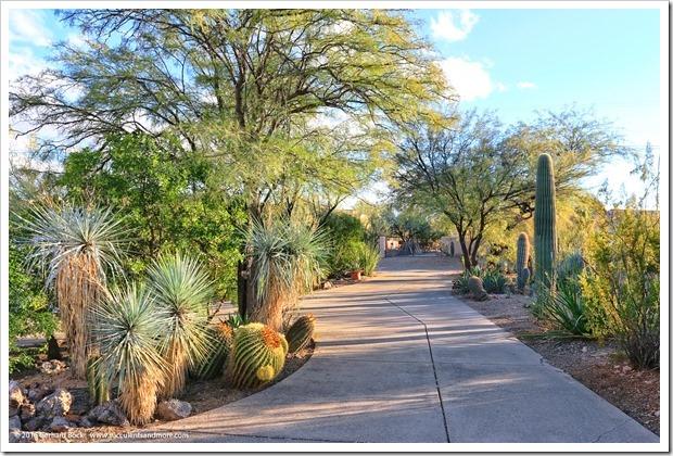 151229_Tucson_GregStarr_0089