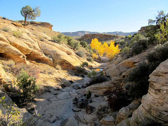 Yellow trees in the side canyon