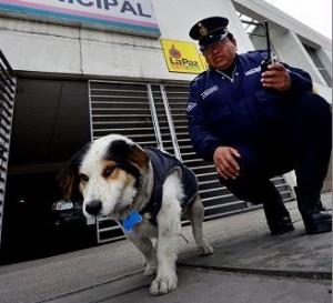 La Paz: Bigotes, el perro guardia municipal