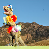 2014DinoBeachParty5k10k