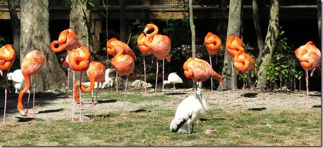 flamingostorkIMG_7379