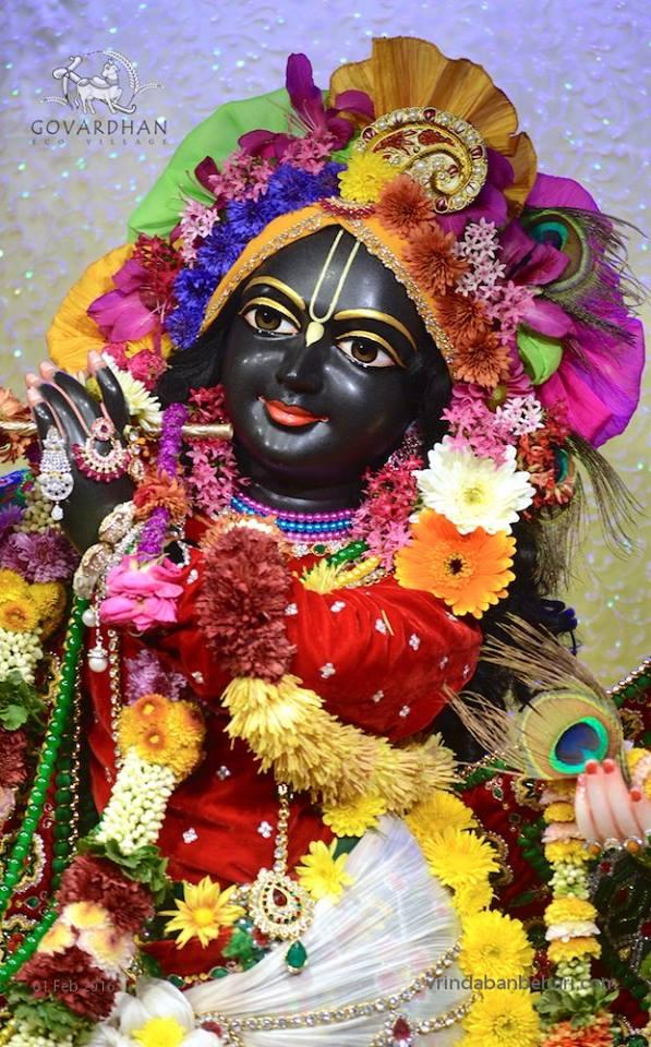 ISKCON GEV (Wada) Deity Darshan 01 Feb 2016  (1)