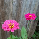 Gardening 2012 - 115_1991.JPG